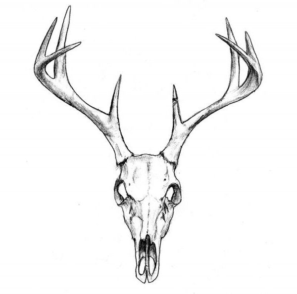 Deer Easy Skull Tattoo Design Easy Deer Tattoos Easy Tattoos Crayon